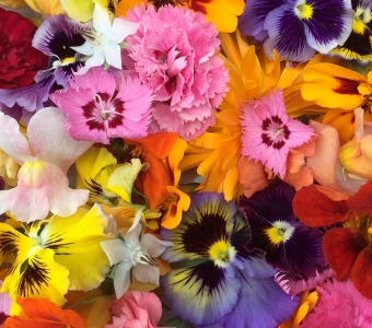 Edible flowers available to buy online!
