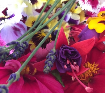 Edible flowers for July