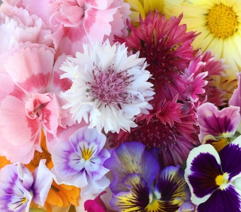 Edible flowers available in July