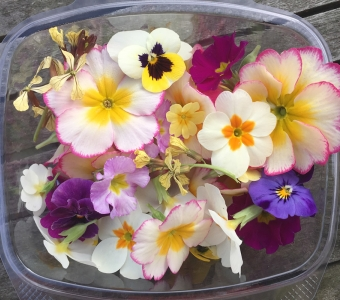 Spring flowers available now