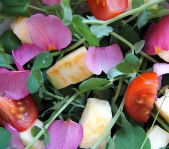 Pink primula and pea shoot salad