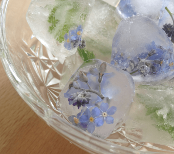 Forget-Me-Nots on the rocks