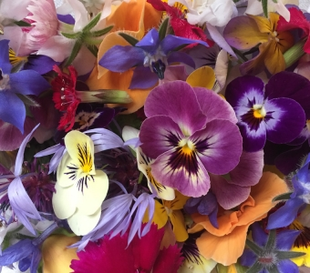Edible flowers for early summer