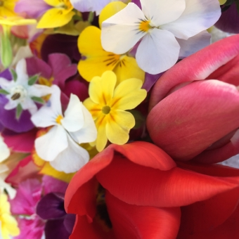Super spring edible flowers mix