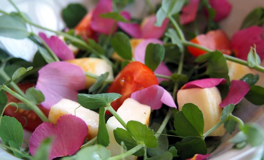Edible flower primula petal salad with pea shoots