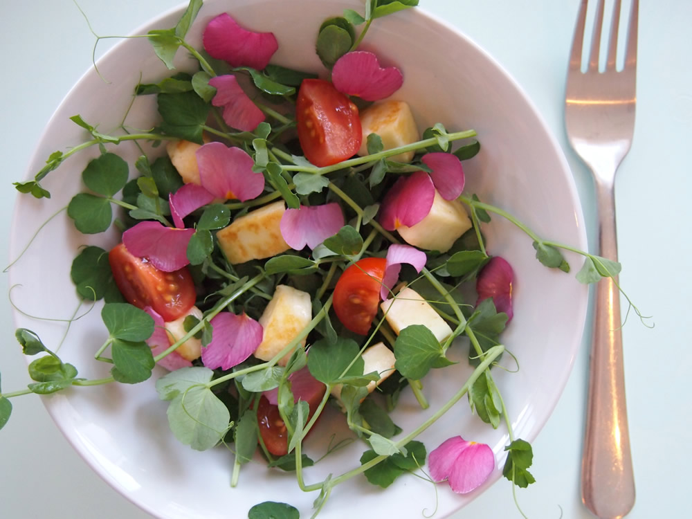 Edible flowers primula salad