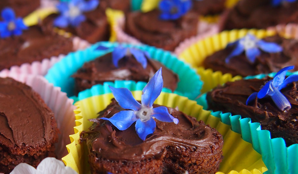 Edible flowers of borage and anchusa and chocolate brownies