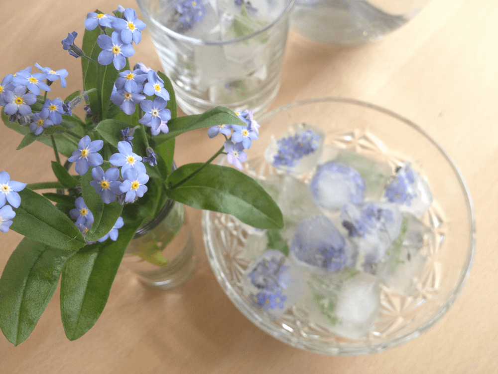 Forget-me-nots edible flower ice