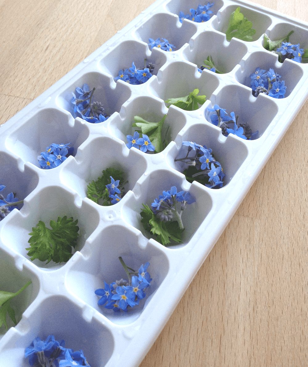 Making edible flower ice cubes