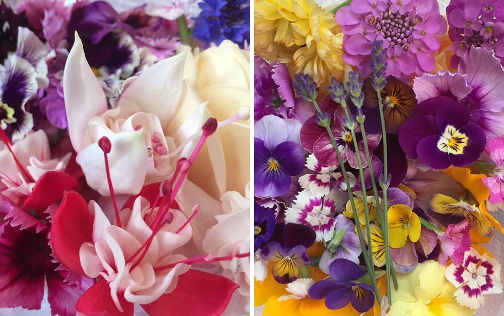Edible flowers in July in Nottingham
