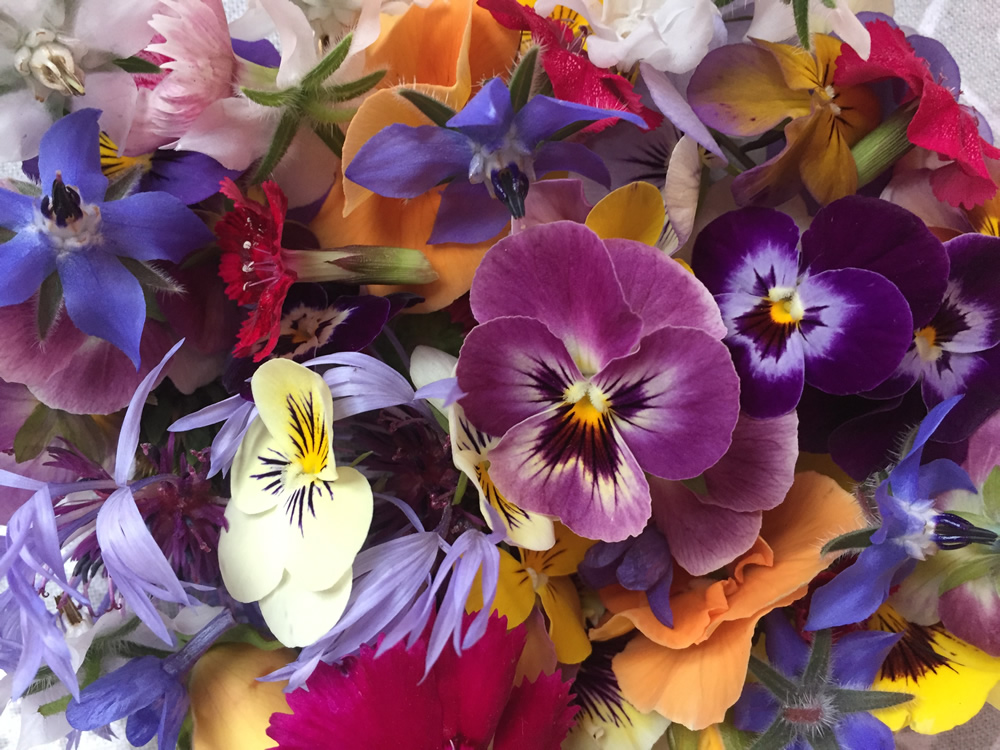 Edible flower mixes for early June