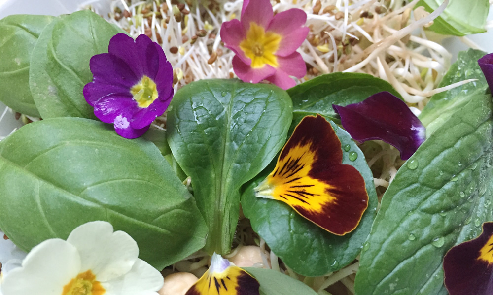 Homegrown sprouts, leaves and edible flowers