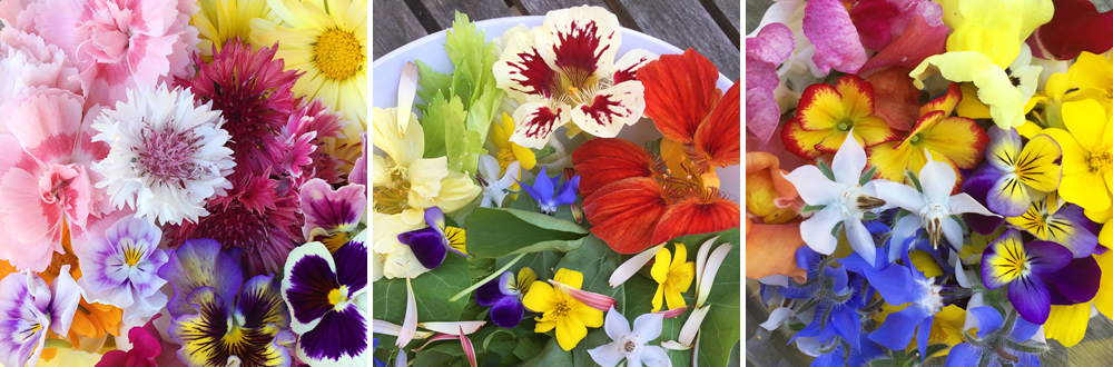 Edible flowers available to buy online in July