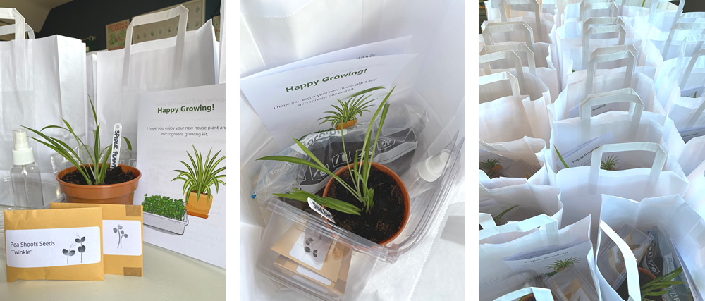 Growing kits including a house plant, seeds, trays, instructions and white paper bags