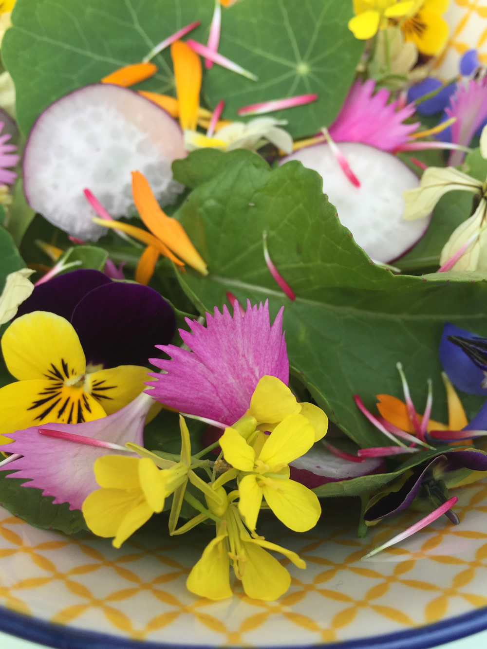 A bowl of colourful edible flowers salad