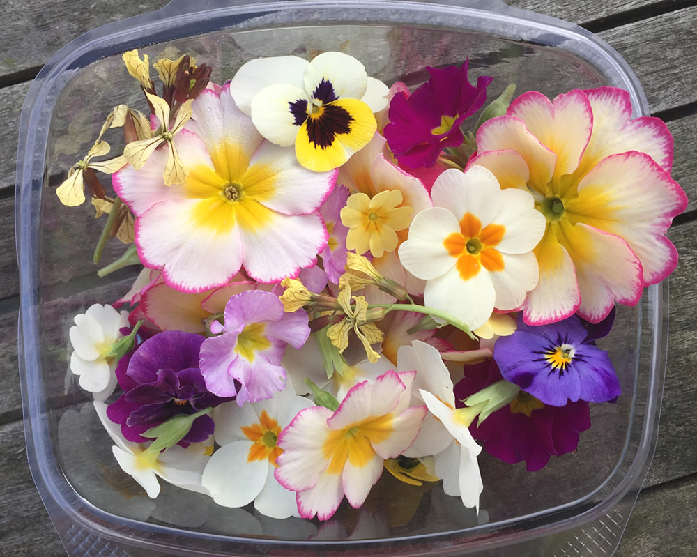 Spring edible flowers available in Nottingham