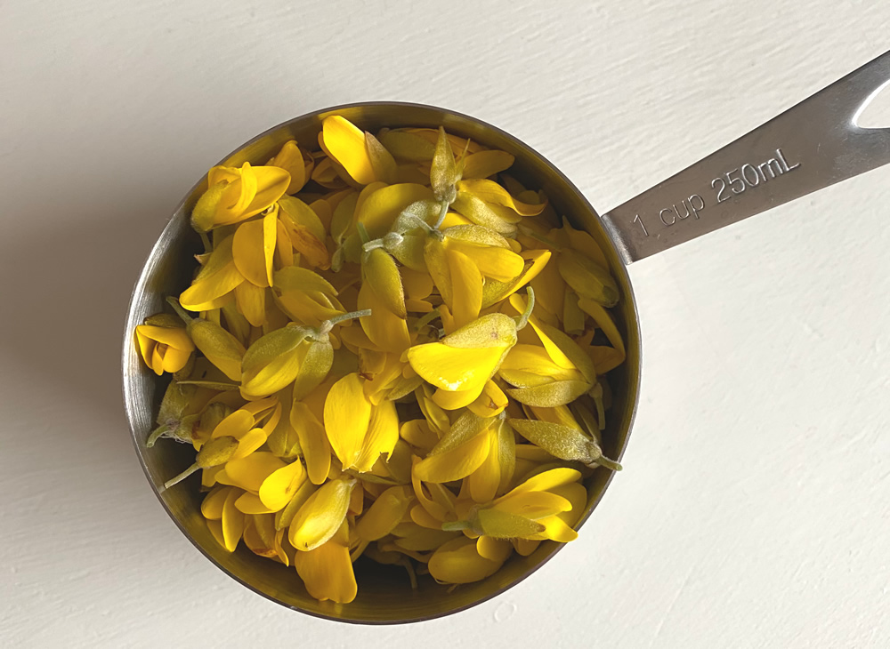 A cup of foraged gorse flowers