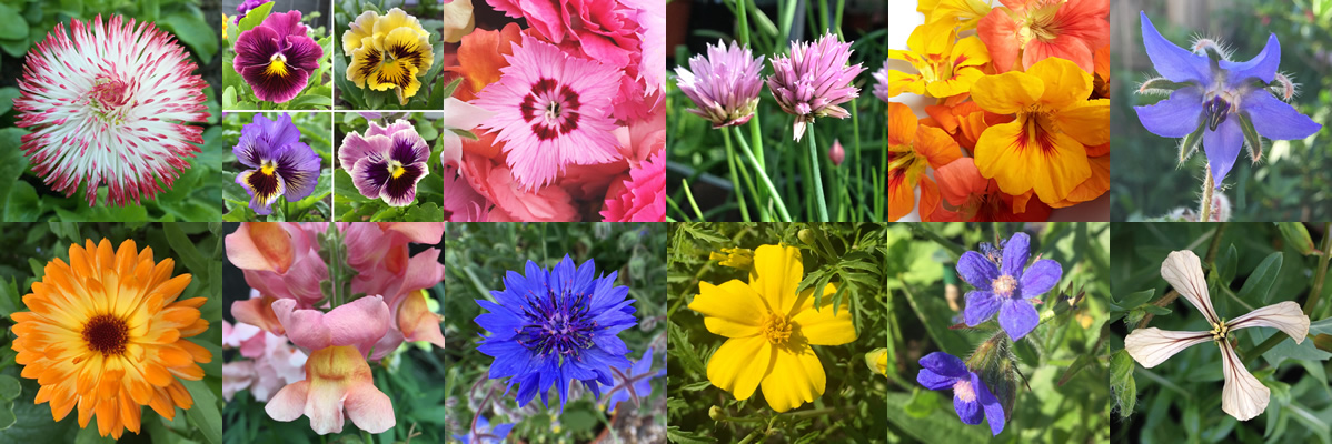 Edible flowers available to buy in June