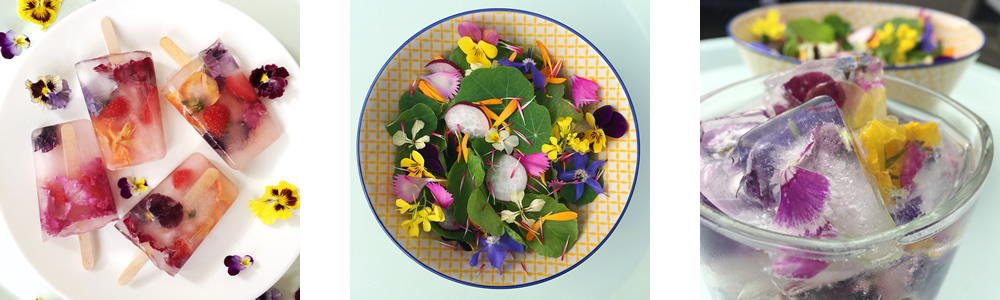 Edible flowers dishes - salads, drinks and ice lollies