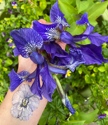 A hand holding some blue Iris flowers, with a blue pansy tattoo on the wrist